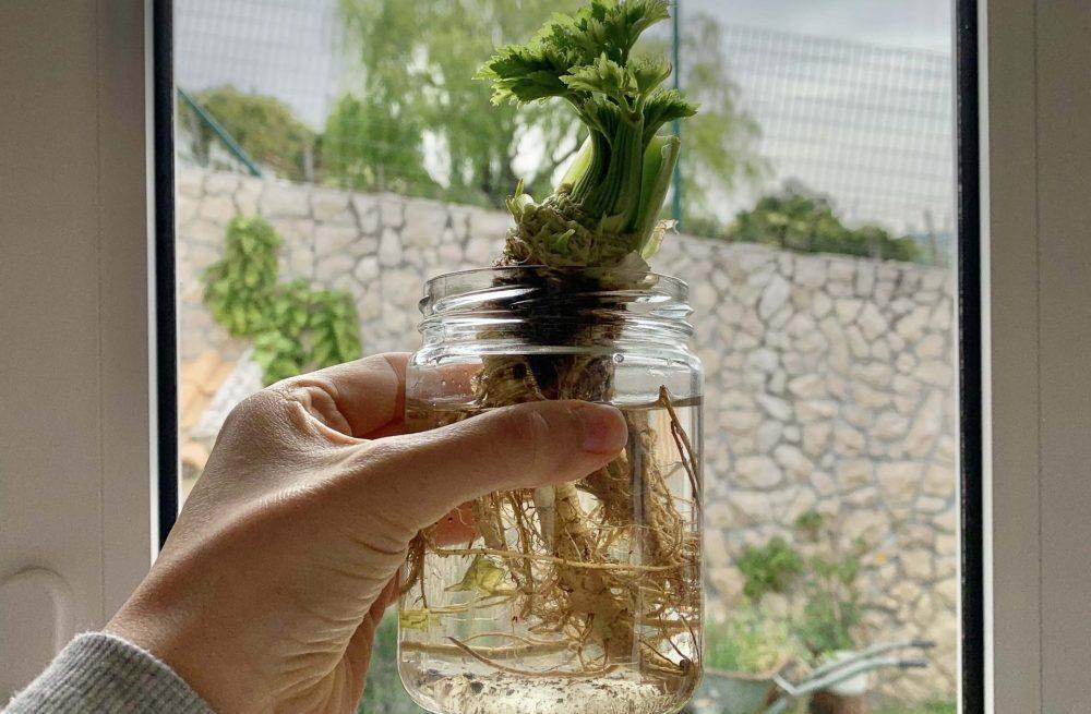 Re-plantar - cozinhar sem desperdício